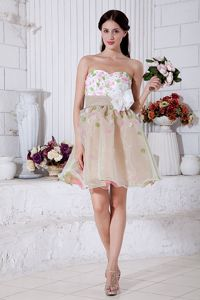 Lovely Multi-color Appliques Organza Homecoming Dance Dresses in Chicago